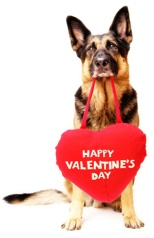 dog-with-valentines-day-heart (1)